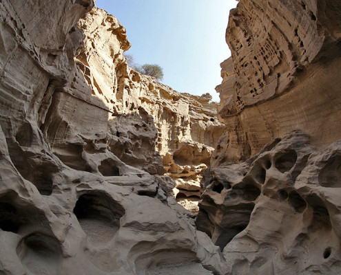 Tours to Iran-Qeshm Island