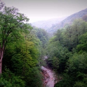 Iran's Hyrcanian Forests Inscribed on UNESCO World Heritage List