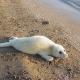 Iran Doostan social responsibility saving the endangered Caspian Seal