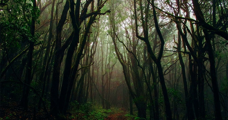 Screaming-forest-Torghabe
